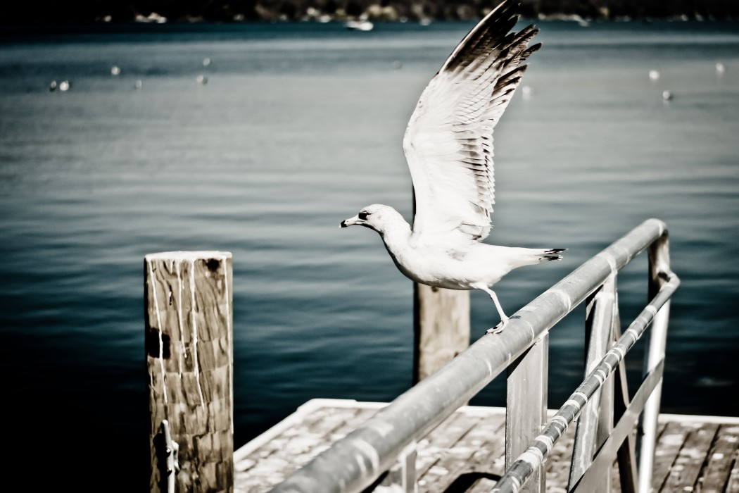 Some Birds--poem by Judy Bebelaar
